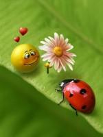 for_my_ladybug