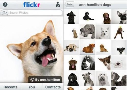 flickrappdogsx5351